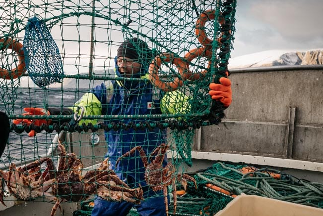 Green crab pots are used for catching the Norwegian king crabs. The peak crab fishing season runs from October to January because that's when the crab shells contain the most meat.
