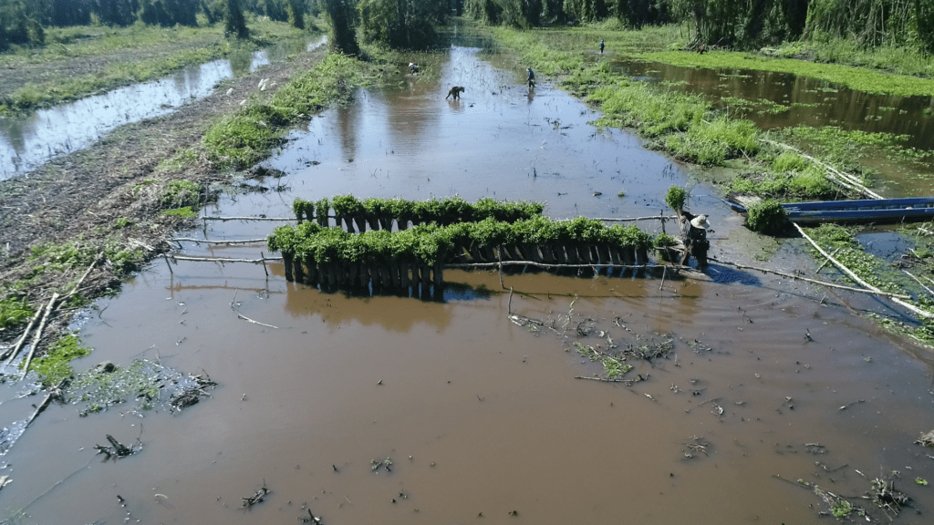 An aerial shot of the plantation process in GIZ's Vietnam tree planting initiative
