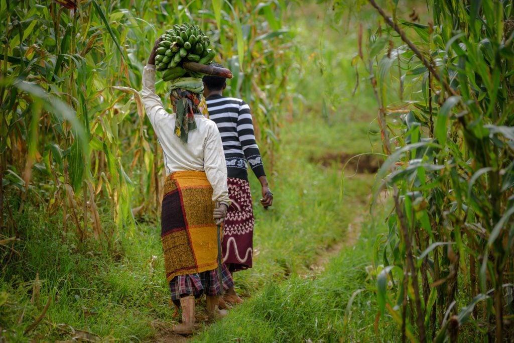 Village women walking through the farm fields of Uganda