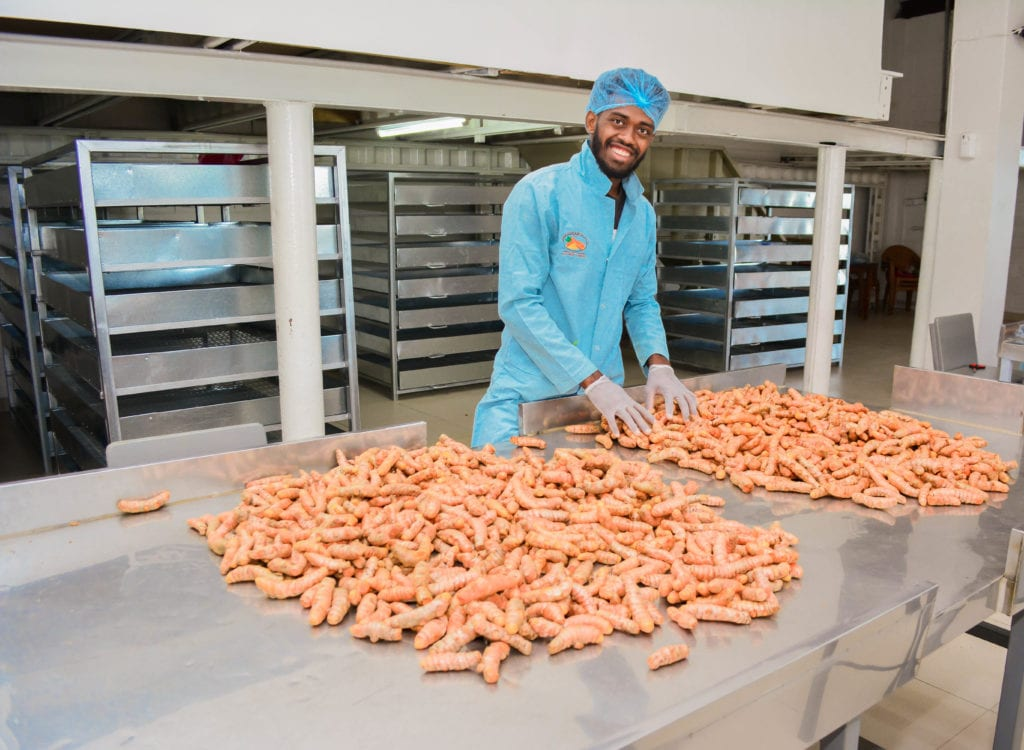 The fresh turmeric undergoes a multiple-step process to be ready for shipment.