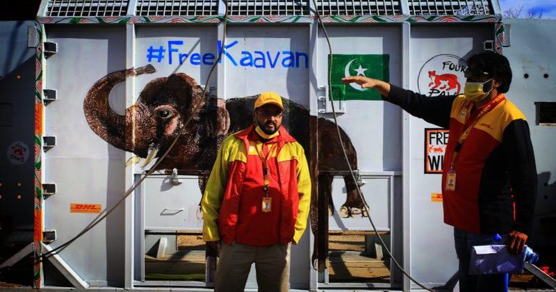 Moving Kaavan the world's loneliest elephant