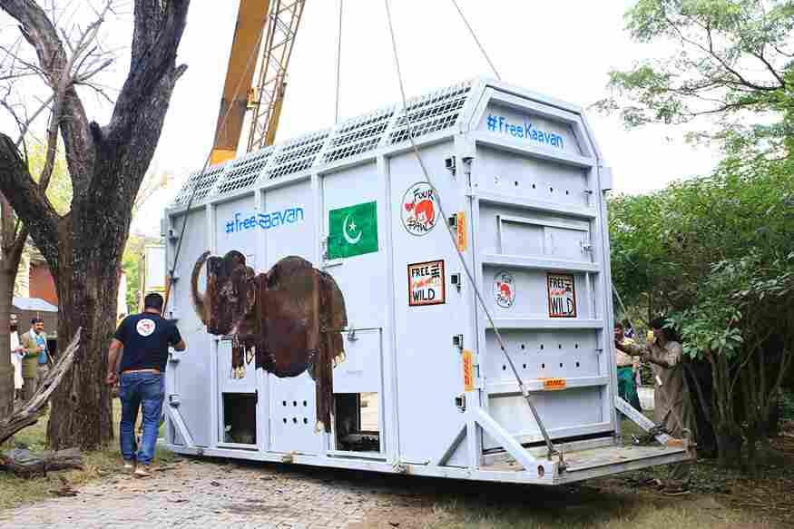 Kaavan special IATA crate