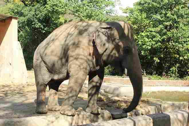 Kaavan the world's loneliest elephant