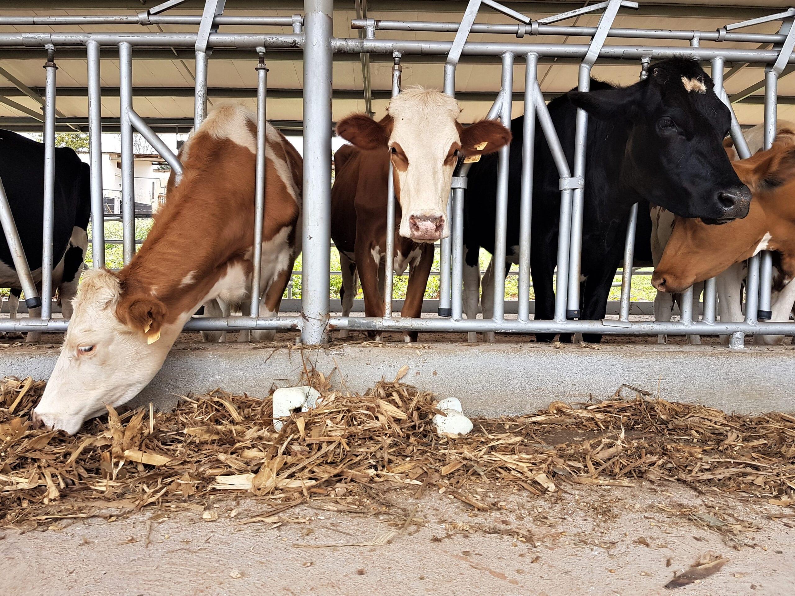 Kenya is the top destination for Uganda's milk exports. (Photo: Shutterstock)